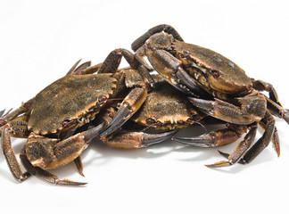 swimming crabs