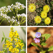 Heilpflanzen-Collage