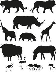 vector_animals