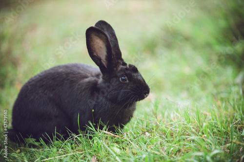 Cute bunny enjoys the garden
