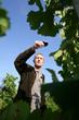 man walking in a vineyard and testing wine