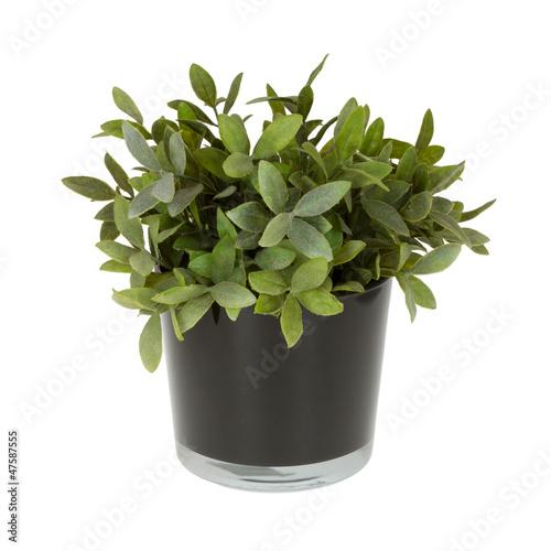 Plastic plant in a flowerpot