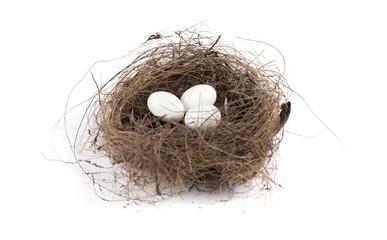 Nido con uova di uccello