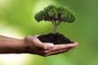 mano con árbol joven