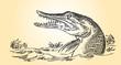 River predator - pike