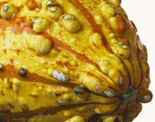An Orange and Yellow Ornamental Gourd with Dewdrops