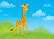 giraffe walking in savanna