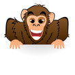 Monkey behind white board