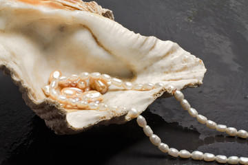 pearl jewels inside  oyster
