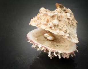 oyster with precious pearl