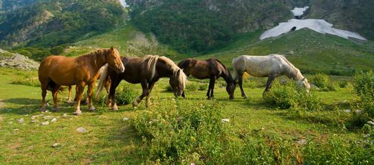 Cavalli pascolo brado, Alpi marittime