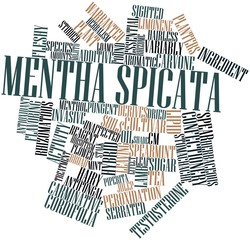 Word cloud for Mentha spicata