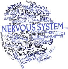 Word cloud for Nervous system