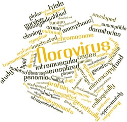 Word cloud for Norovirus