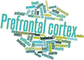 Word cloud for Prefrontal cortex
