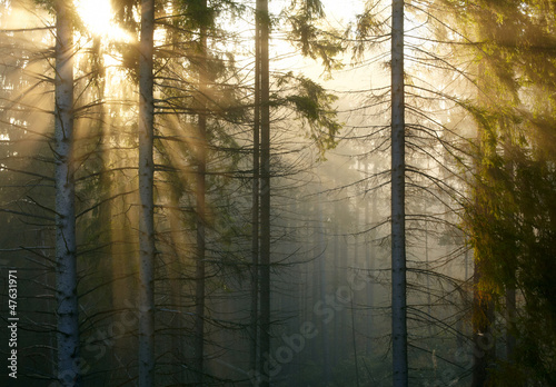 Foto op Canvas Bos in mist Forest with fog and sunlight