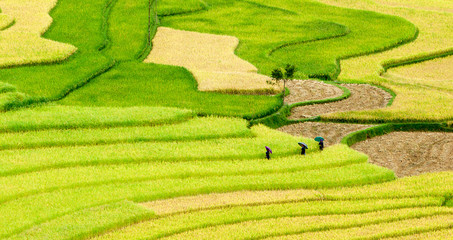 Three women visit their rice fields in Mu Cang Chai, Yen Bai, Vi