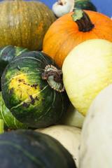 Squash Harvest III