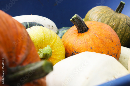 Squash Harvest II