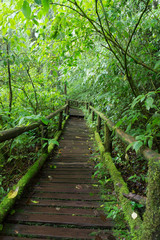 Classic wooden walkway in rain forest - Doi intanon, Chiang Mai