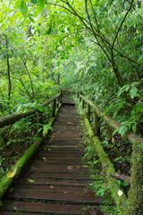 Classic wooden walkway in rain forest - Doi intanon, Chiang Mai
