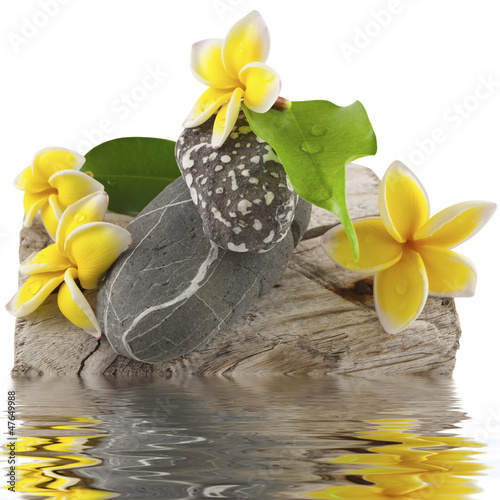 fleurs et pierres sur bois flotté