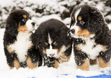 Dog puppest are halfly snowy and wet