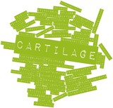 Word cloud for Cartilage