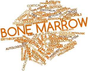 Word cloud for Bone marrow