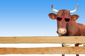 Kuh hinter dem Gartenzaun
