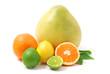 Arrangement mit Zitrusfrüchten - citrus fruits