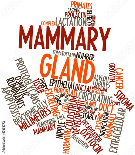 Word cloud for Mammary gland