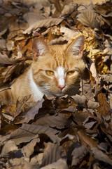Rote Katze im Laub