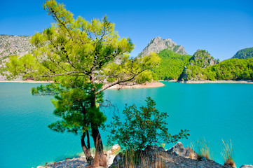 Small green tree against the azure waters of a mountain lake