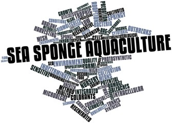 Word cloud for Sea sponge aquaculture