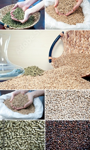brewing ingredients barley malt, hop and water
