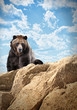 Wild Bear Mammal on Cliff with Clouds