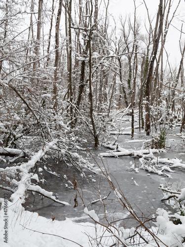 Branches dans l'étang gelé