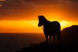 Pony sunset