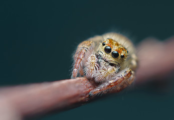 Little jumper