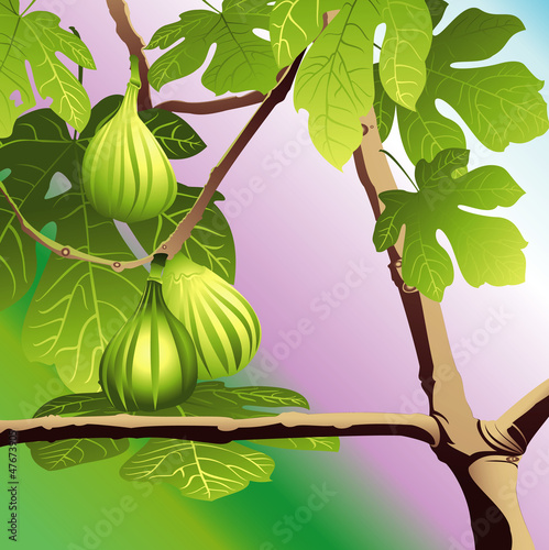 Three Green Figs
