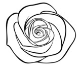 black silhouette outline rose, isolated on white