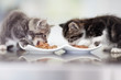 Tucking into to a heathly meal - Pet nutrition