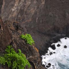 Végétation Tenerife îles Canaries fond