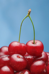 A pair of cherries on the top of abundance of cherries