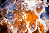 Frost on leaves - 47700166