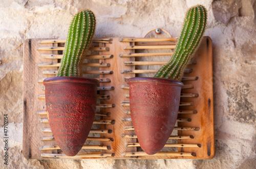 Cactus inside a pot
