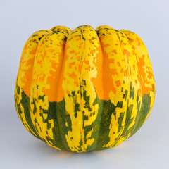 Close-up of a colorful organic squash