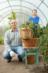 Man and woman in tomato plant