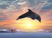 dauphin sautant au-dessus de coucher du soleil mer
